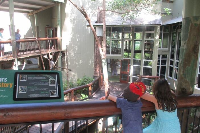 kids, watching, koalas
