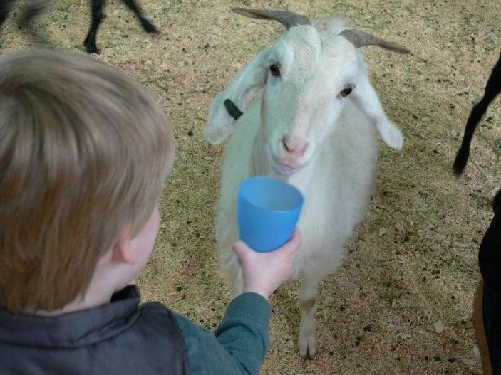 brisbane-kids-ekka-animals