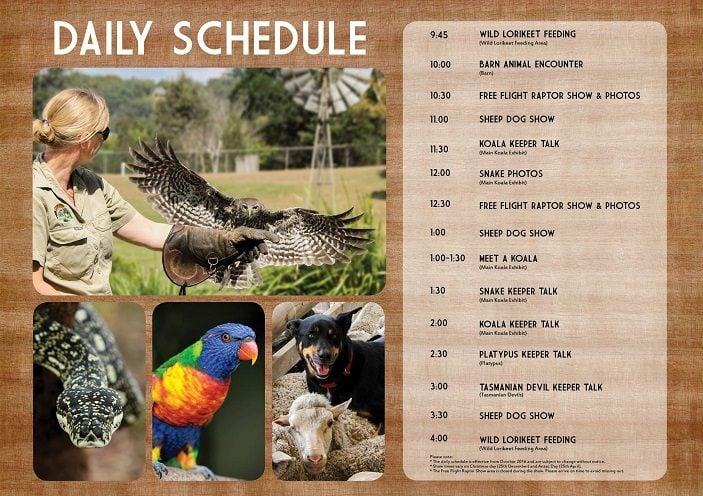Lone Pine Koala Sanctuary Daily Show Schedule