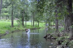 white cedar creek waterhole