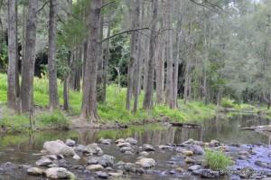 white cedar creek