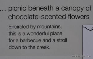 picnic at the creek