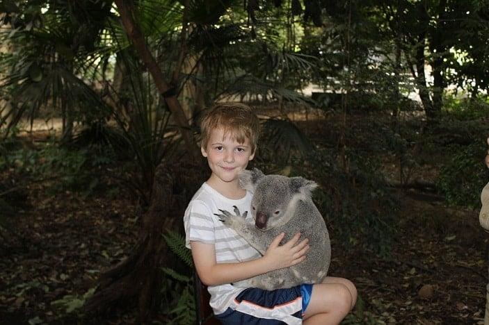 koalas at lone pine