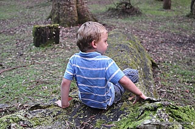 apple tree park, springbrook