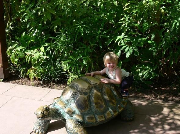 australia zoo turtle