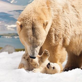 Polar Bear Shores