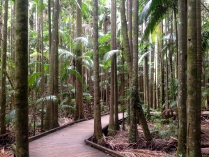 rainforest walk at Mary Cairncross Scenic Reserve