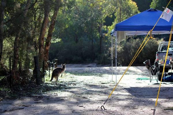 Camping spots around Brisbane