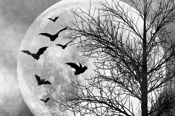 Spooky night scene