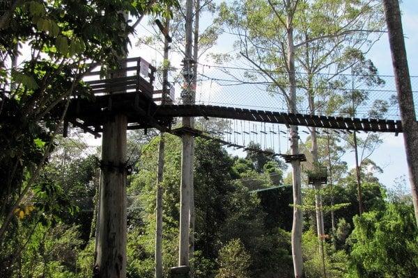 Tree Tops Challenge Thunderbird Park