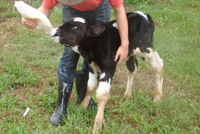 Hosanna Farm Stay 1