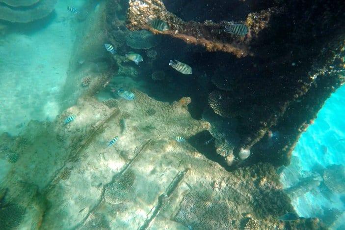 snorkelling at Tangalooma