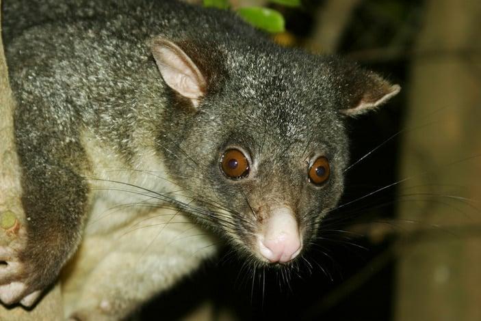 injured wildlife in Brisbane