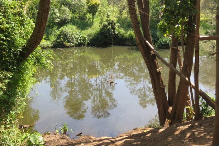 Where Can You Swim In Moggill Creek Brisbane Kids