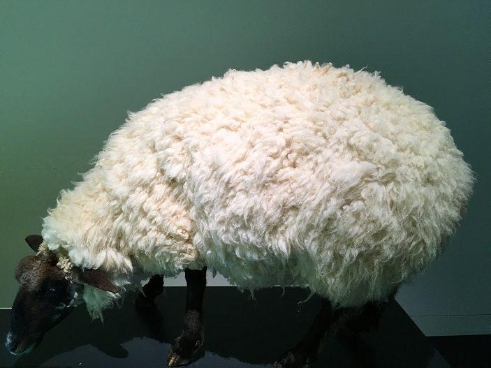 parasitic sheep